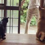 お出かけ時の犬と猫の反応が違いすぎて可愛い Dog and Cat reaction: where do you go?