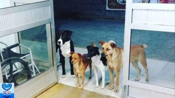 ホームレス男性に付き添い病院にやってきた犬たち。心配そうに見守るけなげな姿に心温まる【感動】