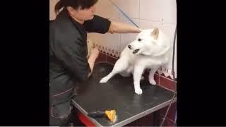 威嚇して今にも噛み付こうとしてくる犬を一瞬でなだめる方法。プロってすごい