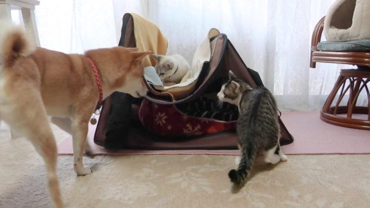 イタズラが過ぎて犬にガチで怒られてしまった猫達。