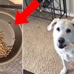 半分ご飯を残す愛犬。その理由に涙が止まらない【感動】