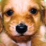 最後の力を振り絞って「いってらっしゃい」とさよならしてくれた愛犬【泣ける話】