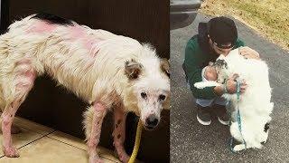 【感動実話】身も心も傷付いていた保護犬は、里親の胸で甘えることを止められなかった!