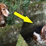 森の中で行方不明となった2匹の犬。発見された姿に思わず涙が溢れる【感動】