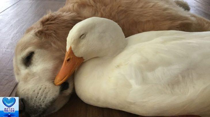犬と鳥の種を超えた友情に心温まる・・・【感動】