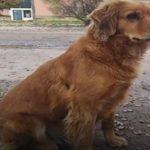 犬の忠誠心。刑務所に入ってしまった飼い主を警察署の前で待ち続ける犬の姿に涙が溢れる【感動】