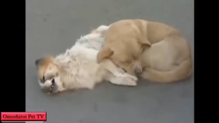 「感動」死んだ友達の側から絶対に離れたくない犬・泣いちゃう